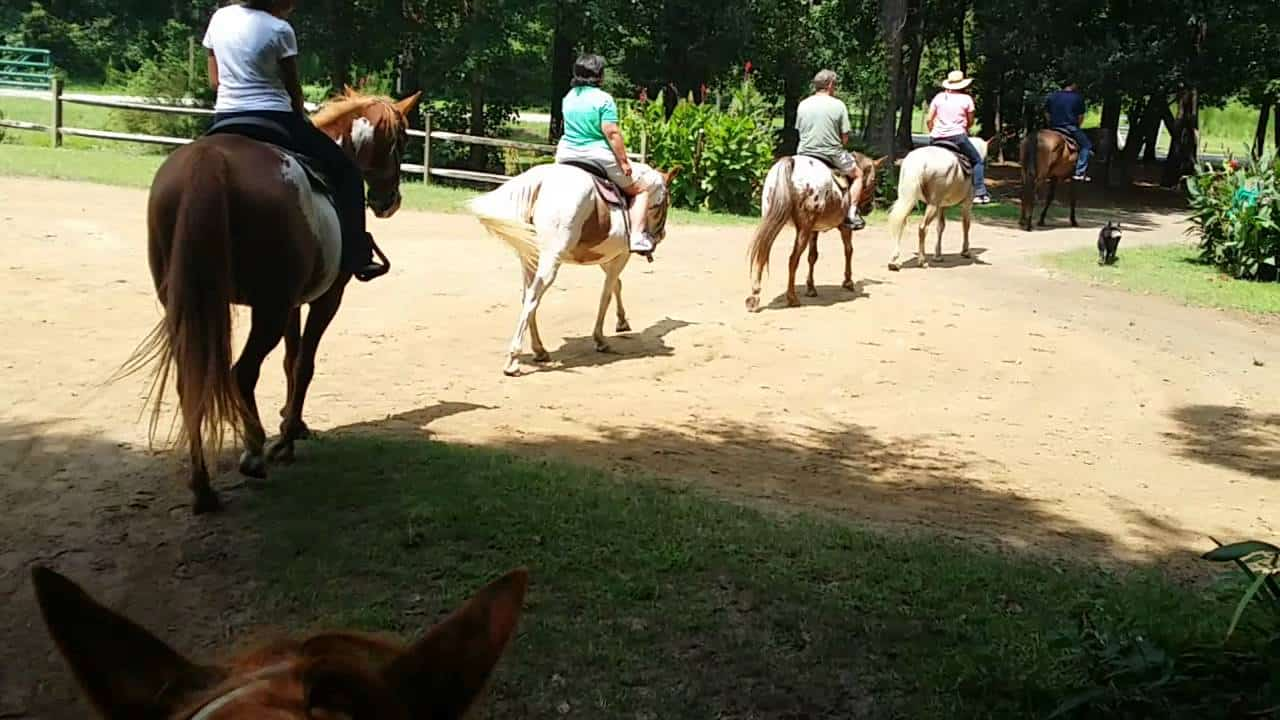 wampee yrtle beach vacation horseback rides