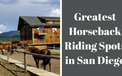 horses tied at ranch