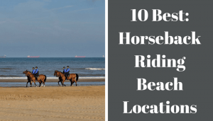 horses riding on the shore