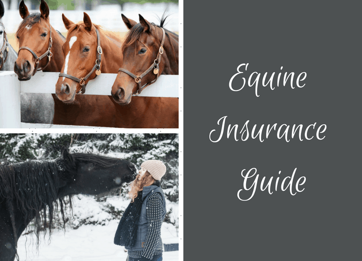 Equine Horse Insurance Purchase Guide