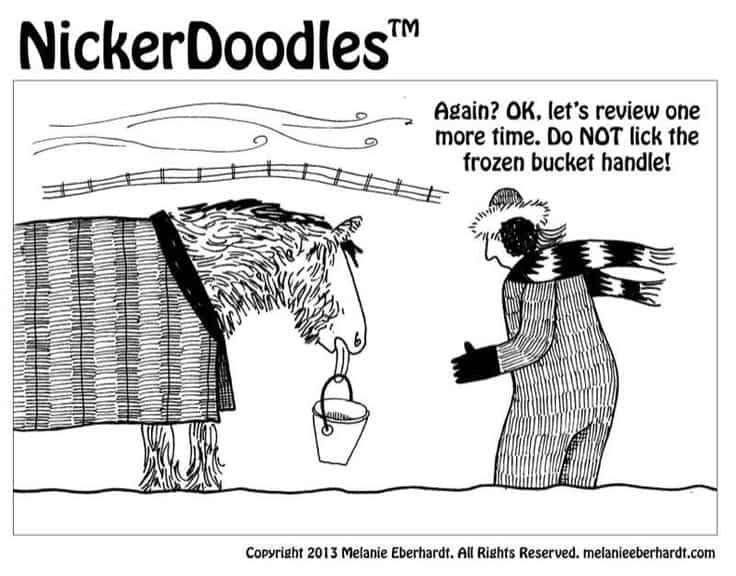 horse licks bucket