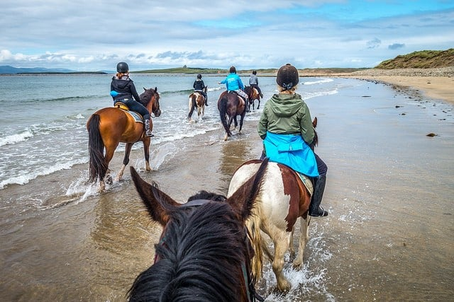 group of horses riding on the shore