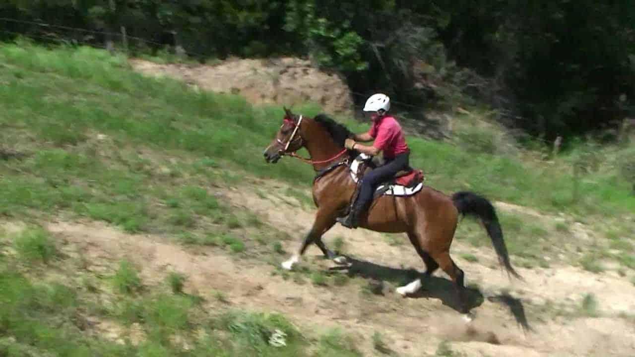 horse running up hill