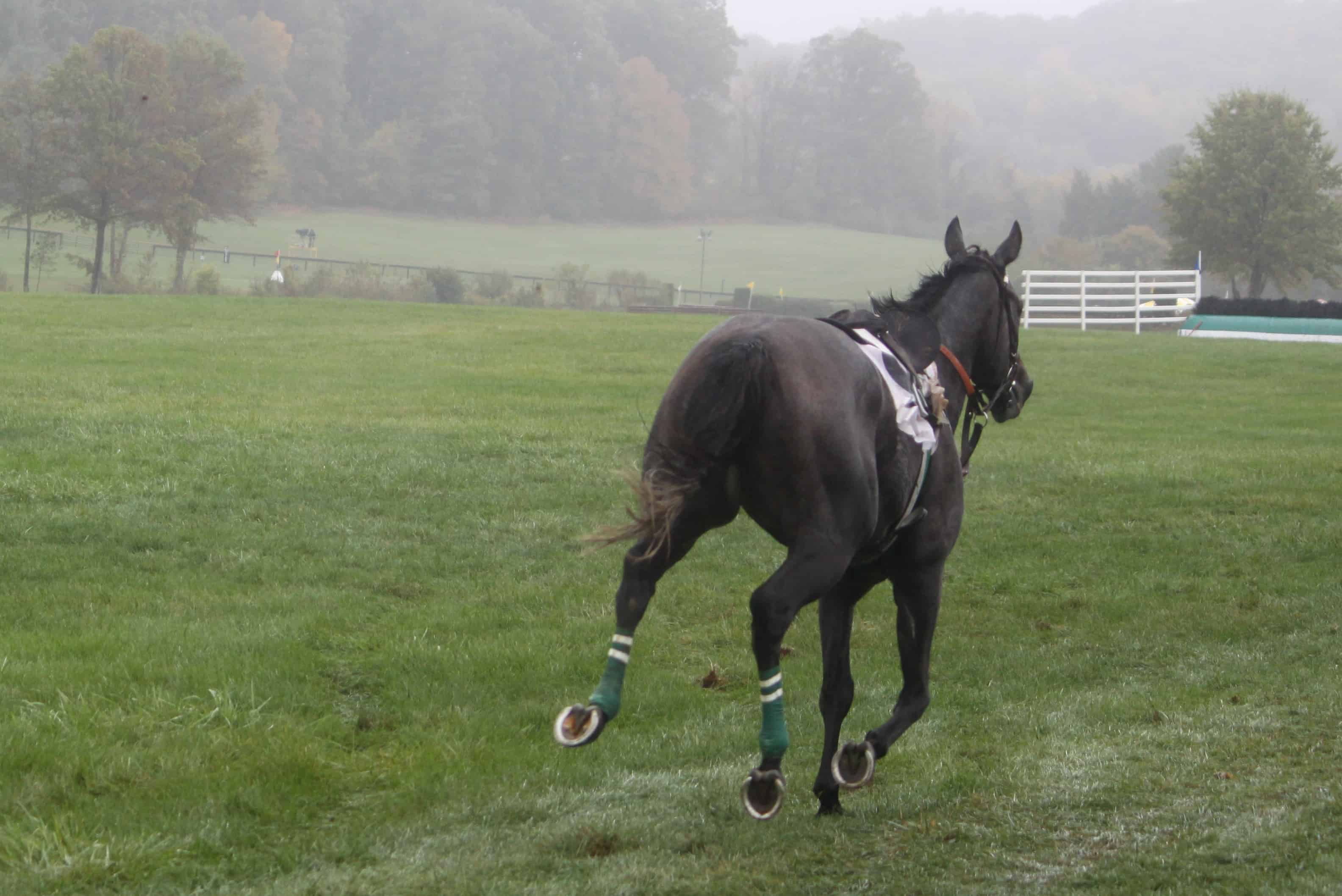 runaway horse