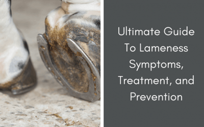 Guide to horse lameness treatment, symptoms, and diagnisis