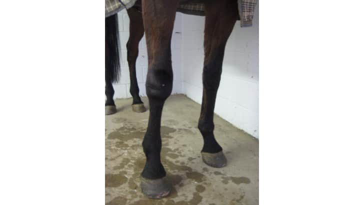 lameness symptoms in horses