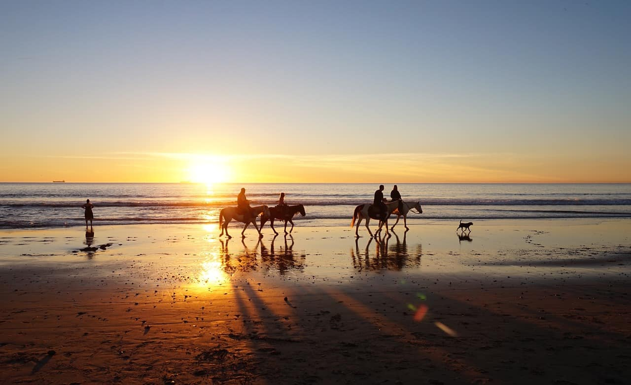 horses on san diego beach