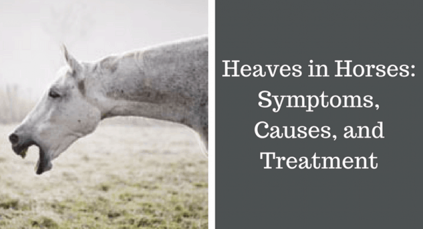 Heaves in Horses Symptoms, Causes, and Treatment