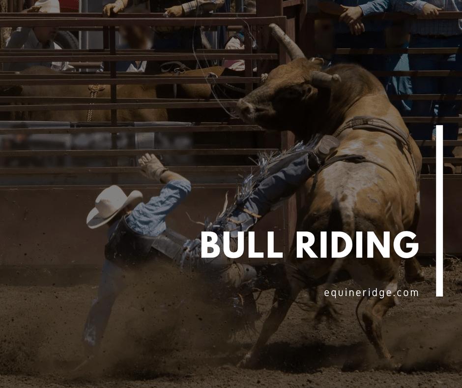 Bull Riding
