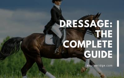 dressage riding