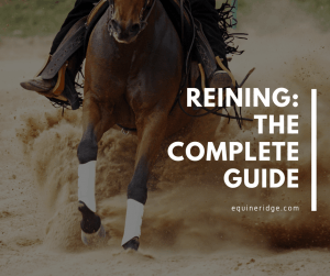 reining horseback riding guide