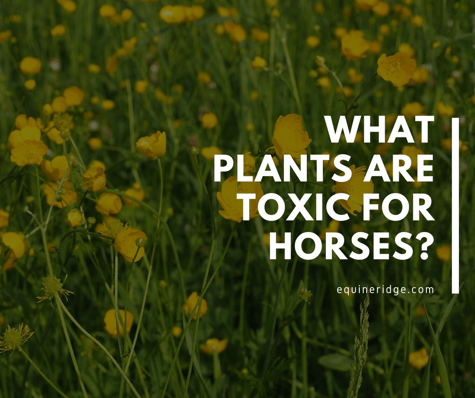 what plants are toxic for horses