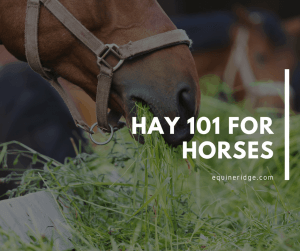 hay 101 for horses and equines