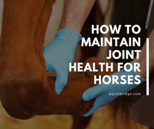 how to maintain proper horse and equine joint health