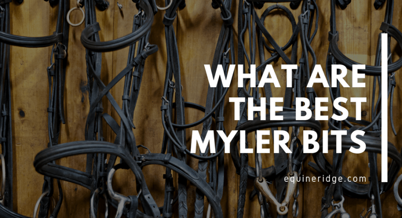 Here are the best Myler Bits for horseback riding