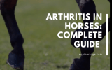 arthritis in horses, treatment prevention and diagnosis