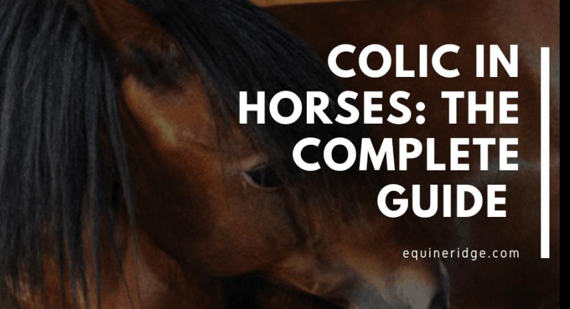 horse colic symptoms treatment prevention