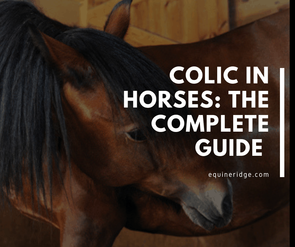 horse colic symptoms treatment prevention