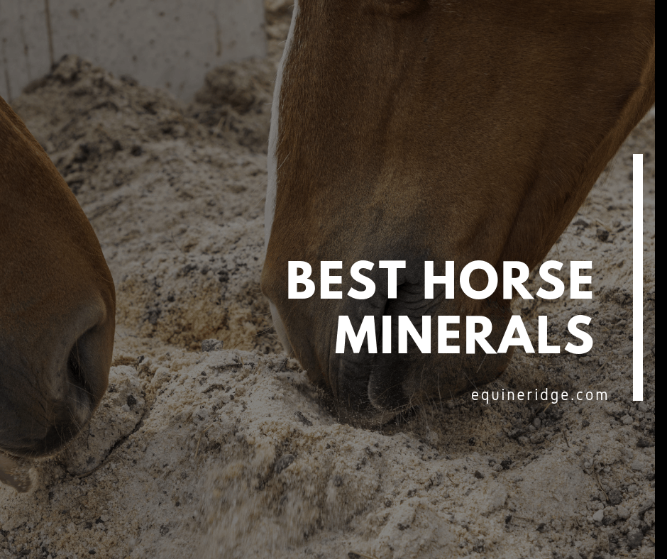 Best Horse Minerals Supplement