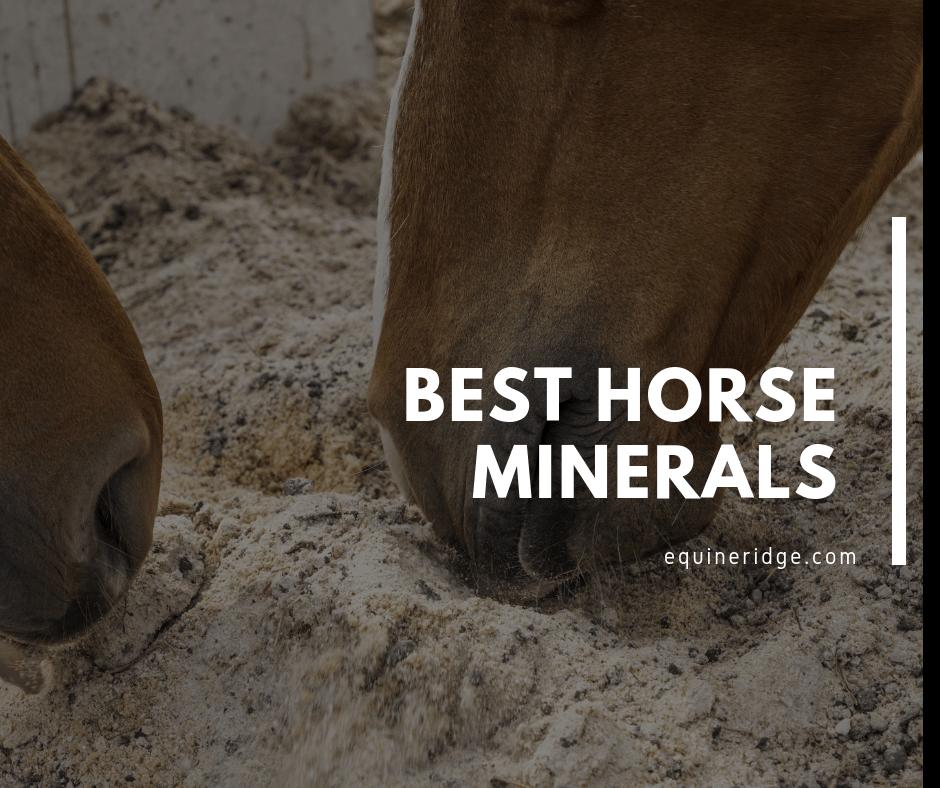 Best Horse Minerals Supplement