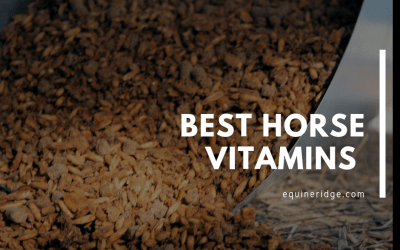Best Horse Vitamins Supplements