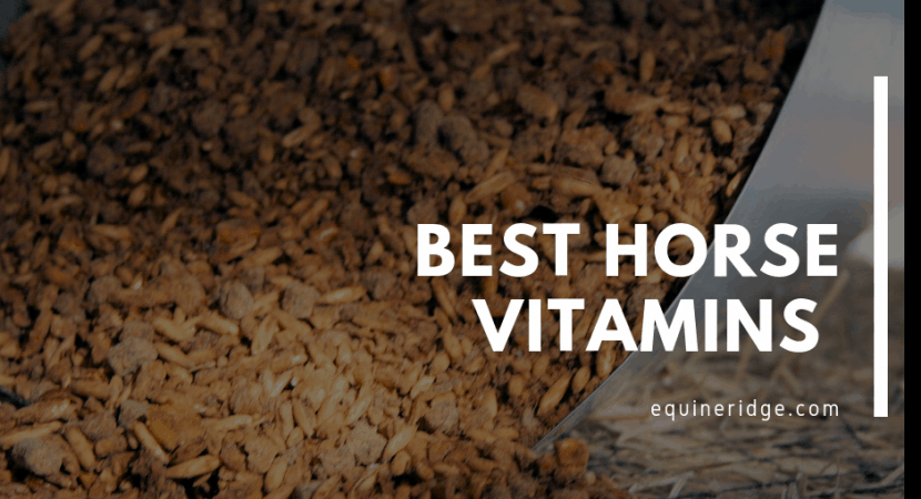 Best Horse Vitamins Supplements