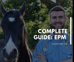 epm in horses