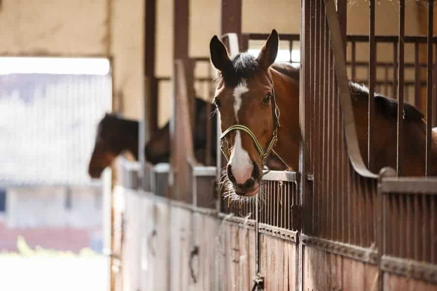 horses in a barn equipped with barn cameras for security and foaling