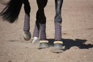 horse legs wearing bell boots close up