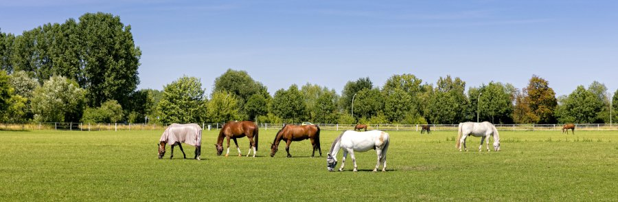 a herd of horses in a pasture with electric fencing