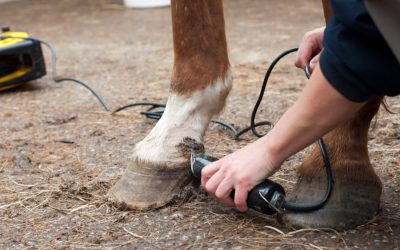 man using horse clippers to trim a horse's pastern