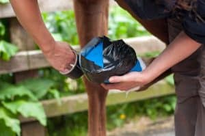 ice therapy being applied to horse's leg