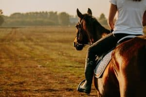 woman riding horse with english saddle pad in field