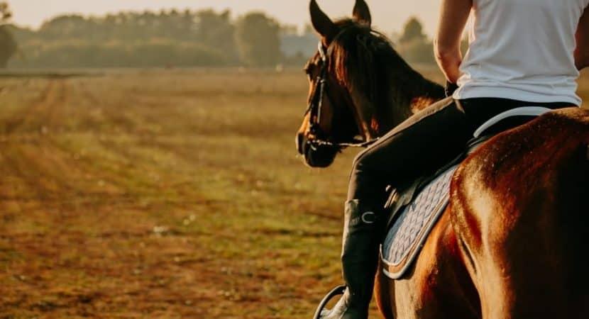 Best Saddle Pad: Western and English Saddle Pads [2019