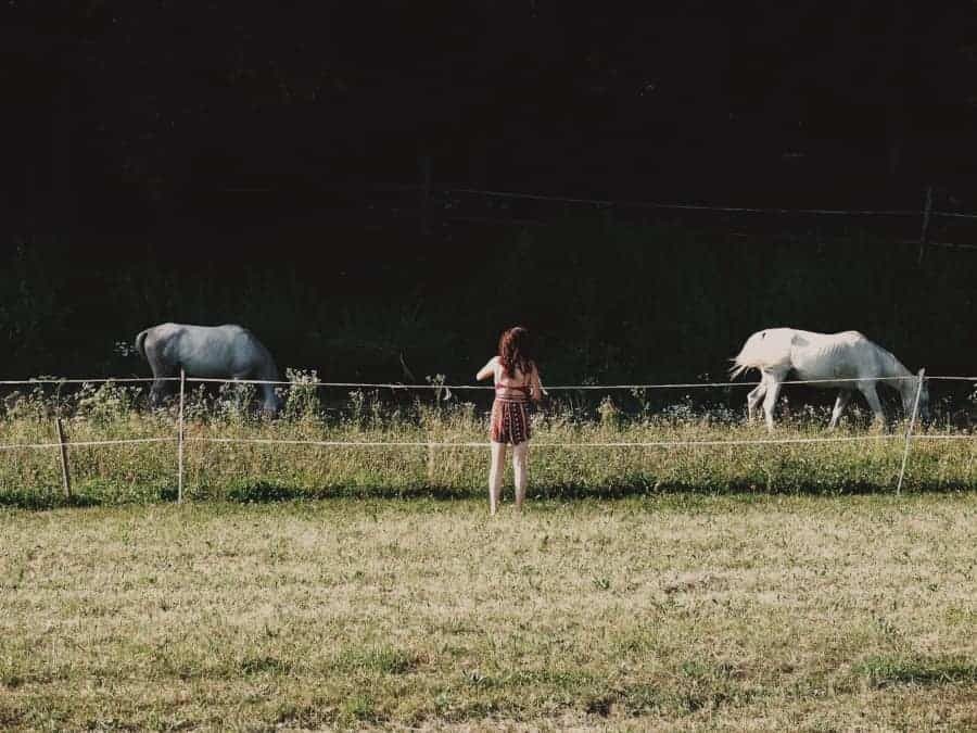 woman standing by electric fence with solar charger with horses in pasture