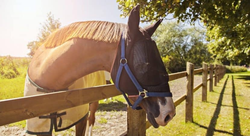 best fly masks for horses