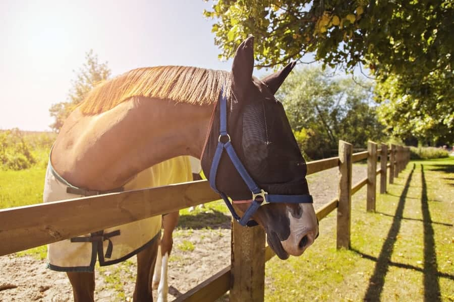 best fly masks for horses