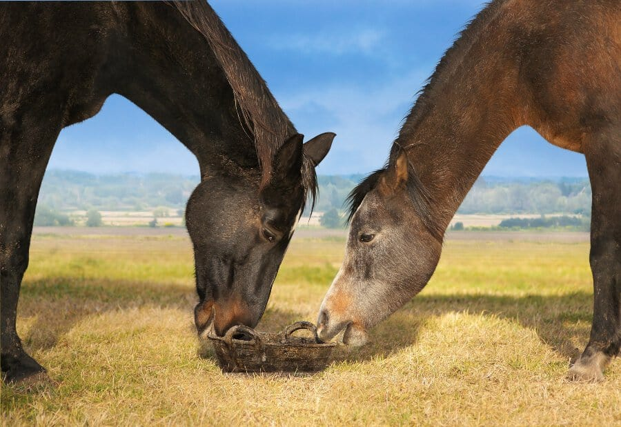 best horse feed