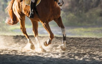 performance horse using horse joint supplements