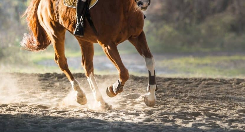 Image result for The Benefits Of Joint Supplements For Horses