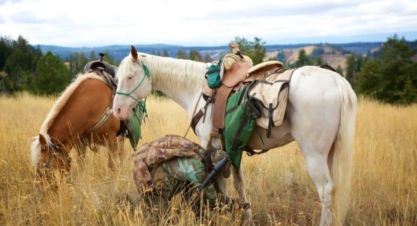 saddlebags for horse