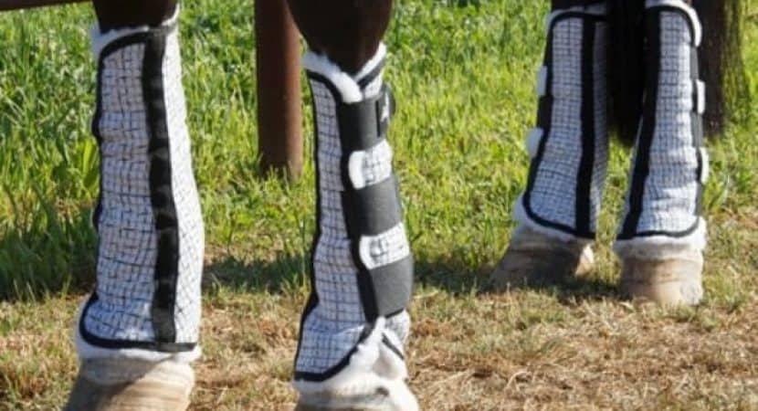 horse leg wraps closeup