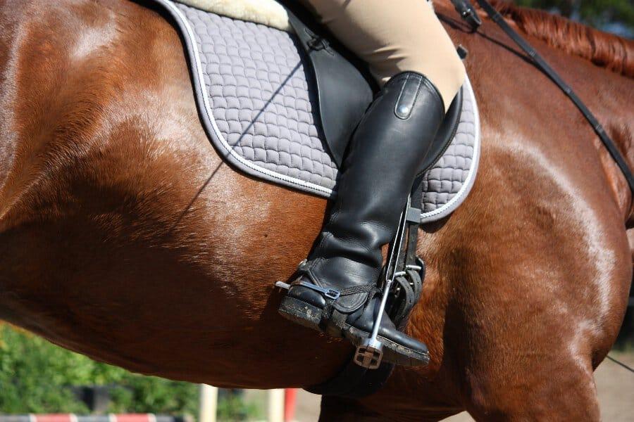 best horse riding breeches