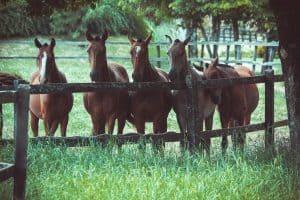 horses waiting for treats