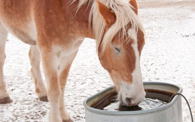 water tank heater in water trough with horse drinking