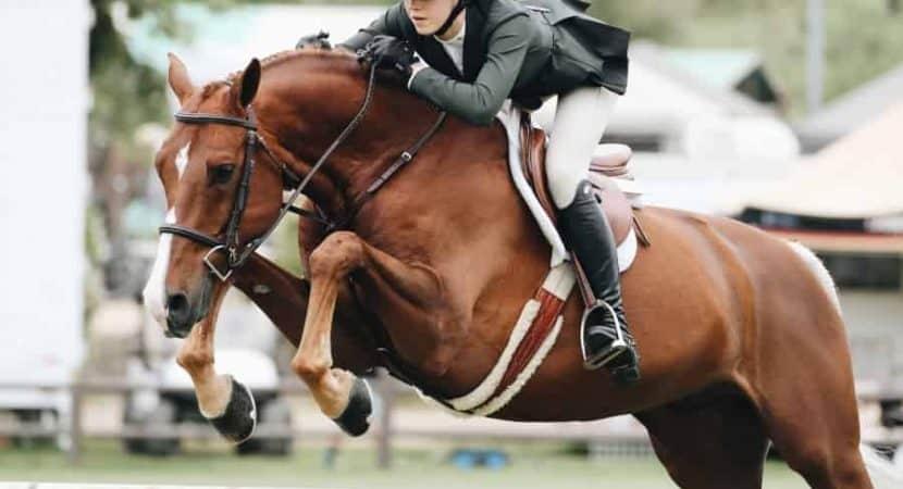 electrolytes for horses