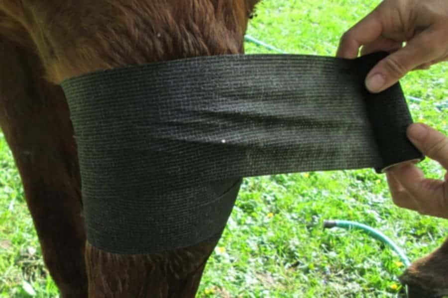 treating horse proud flesh