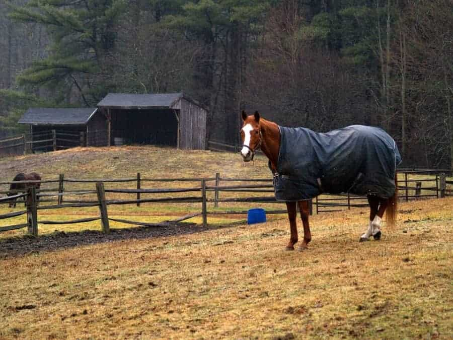 best horse winter blanket