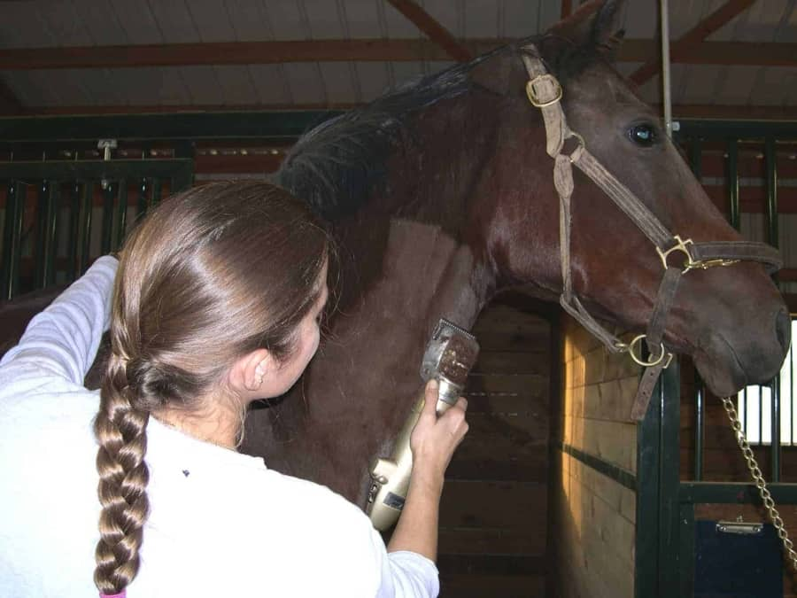 body clipping a horse with clippers