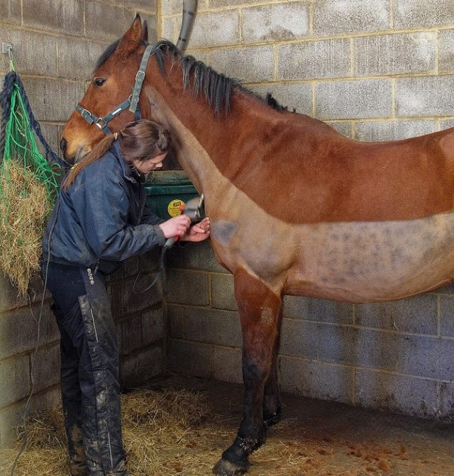 clipping a horse's shoulder